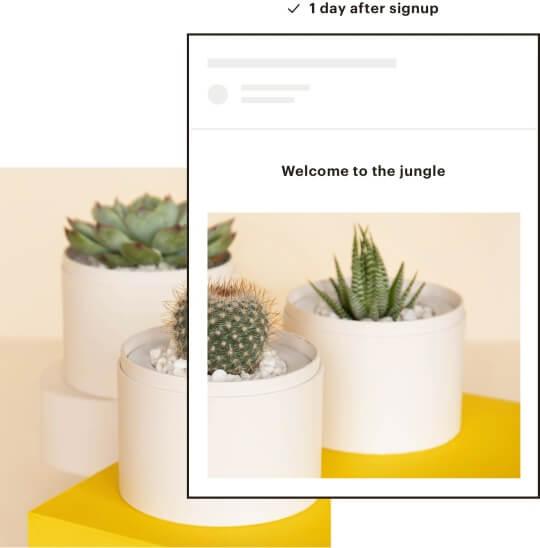Automatismo de Bienvenida con Mailchimp - Agencia Reinicia - Marketing Digital